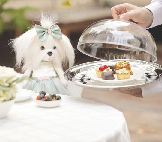 Снимка на колекция Lucky Doggy